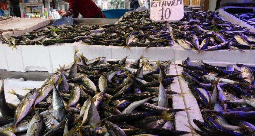 Son 10 yılın en bol istavrit avı yaşanıyor