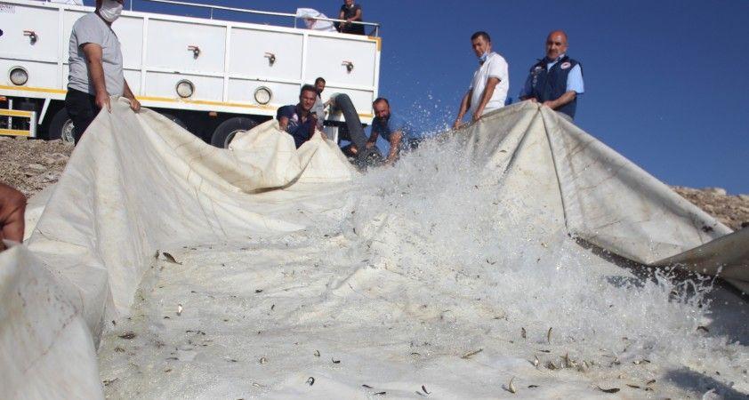 Van'da 1 milyon 200 bin yavru balık suyla buluştu