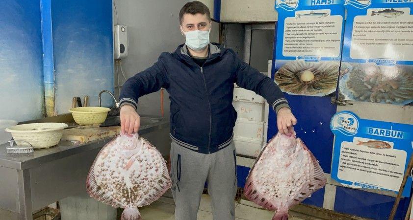 Karadeniz'de kalkan balığı bereketi: Kilosu 200 TL