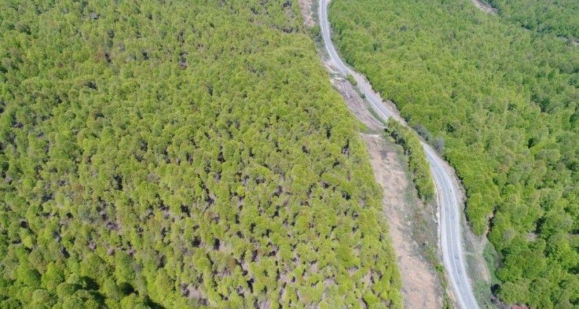 Tırtıl istilasından kurtulan orman rengarenk oldu