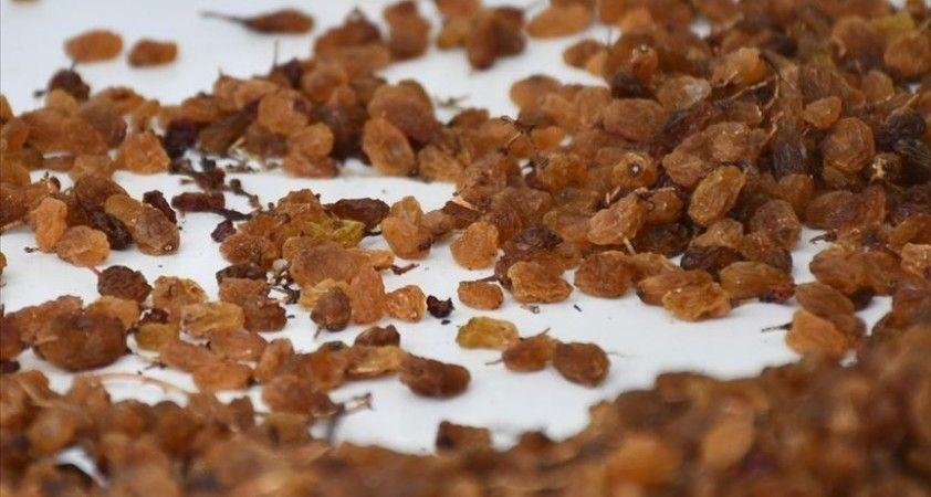 TMO 10 günde 10 bin ton kuru üzüm aldı