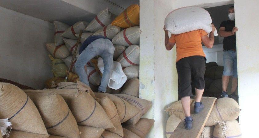 Eylül ayı içerisinde 33 bin 471 ton fındık ihraç edildi