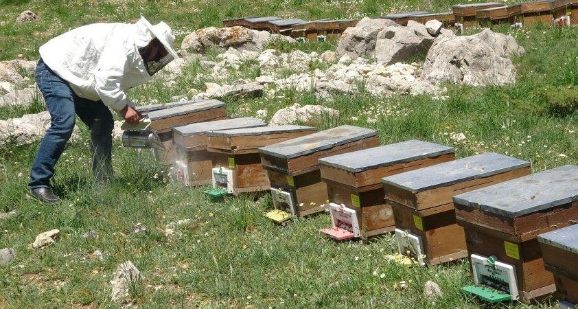 Arıların tatlı yolculuğu başladı, en büyük endişe kuraklık
