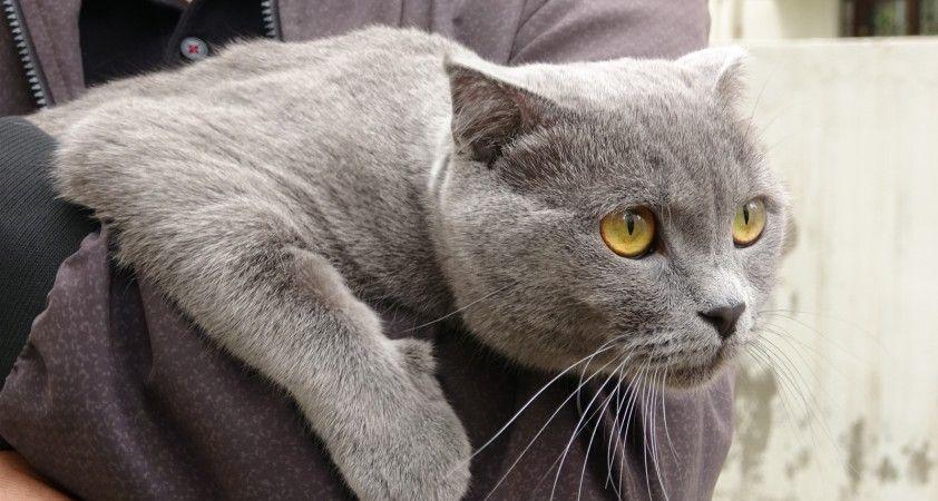 Sevimli kedi 4. kattan dört ayak üstüne düştü