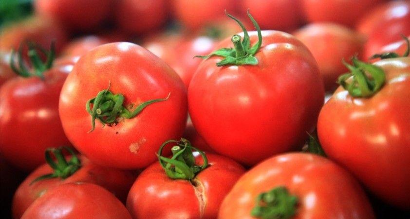 Türkiye'nin 8 aylık yaş meyve sebze ihracatının şampiyonu kiraz ve domates oldu