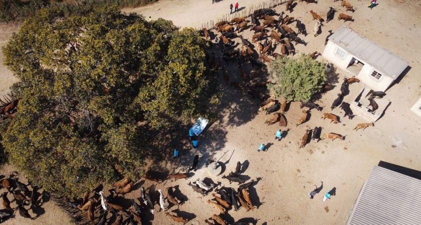 Türkiye Diyanet Vakfı, Zimbabve'de 116 bin 200 kişiye kurban eti ulaştırdı