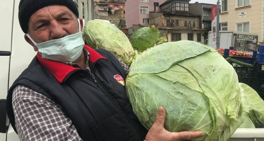 Kış mevsiminin gözdesi Bayburt lahanası tezgâhlarda yerini aldı