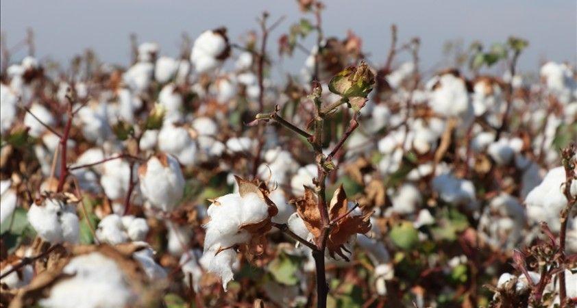 Pamuk ve pamuk döküntüleri 'İhracı Kayda Bağlı Mallar Listesi'ne eklendi