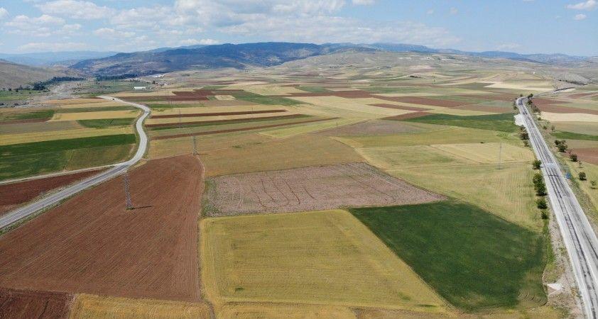 Bayat Ovası'nda 250 bin dönüm tarım arazisini kuraklık vurdu