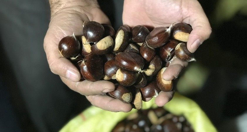 Türkiye'nin kestane pazarı kebapçılarla dolup taşıyor