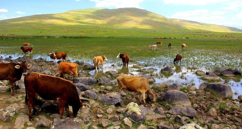 Erzurum'da kuraklık hat safhada, göller bir bir kuruyor