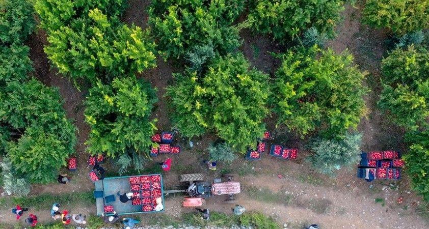 Tarım, ormancılık ve balıkçılıkta çalışan sayısı 70 bini geçti