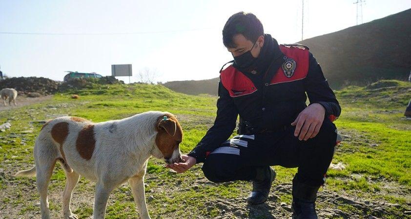Polislerle sokak hayvanları arasındaki dostluk yürekleri ısıttı
