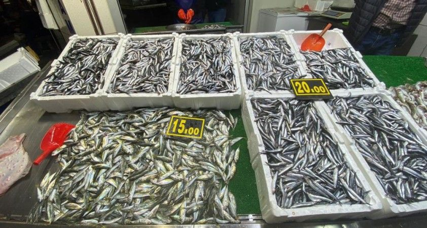 Balık bollaştı fiyatlar tezgahlara yansıdı