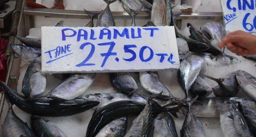 Sinop'ta palamut küstü, fiyatlar uçtu