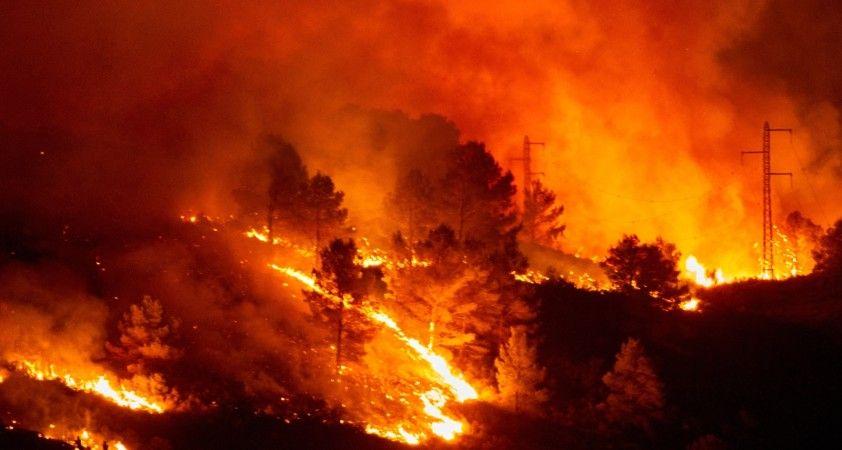 'Dünya'nın ormanları yanıyor