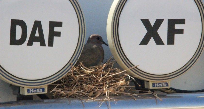 Kuşun yuva yaptığı tır seferden çekildi