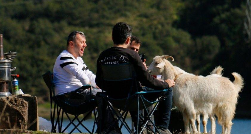 İstanbul'da karnı acıkan keçiler gülümsetti