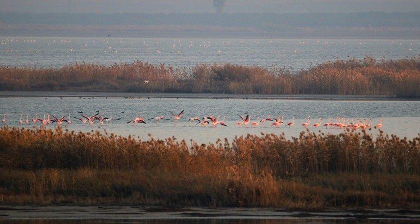 Doğa harikası lagün, hem flamingoları hem de fotoğrafseverleri ağırlıyor