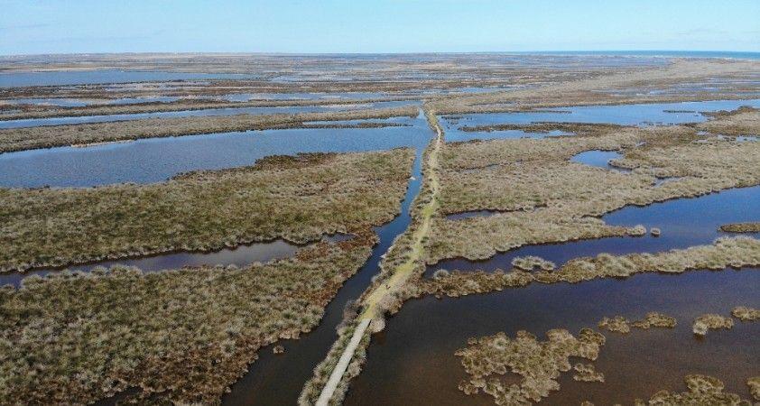 Kızılırmak Deltası'nda sevindiren görüntü