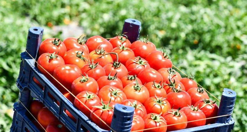 Başkentli çiftçilere 8 milyon sebze fidesi