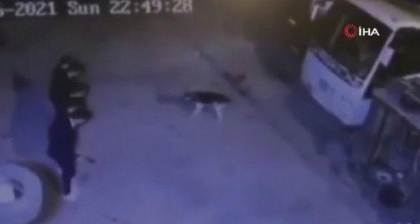 Önce halay çekerek köpekten kaçtılar ardından köpeği halaya kattılar