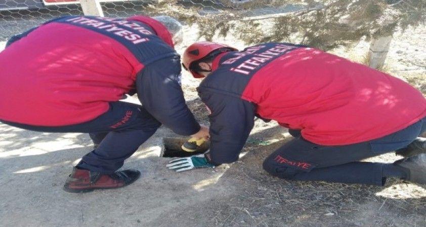 Kuyuda mahsur kalan yavru köpekler kurtarıldı