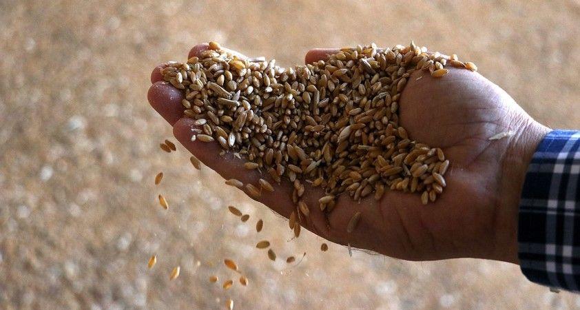 Sertifikasız tohum uyarısı
